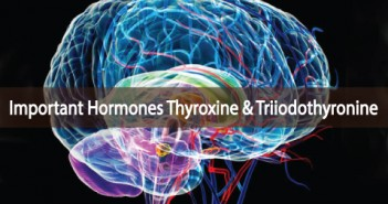 Important-Hormones-Thyroxine-And-Triiodothyronine