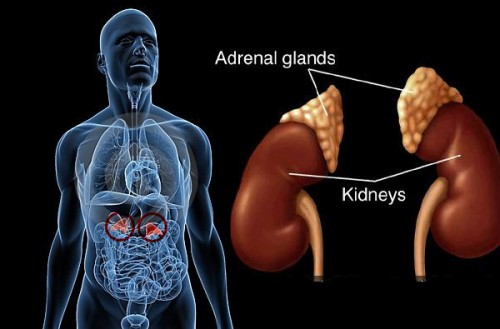 Thyroid-Hormone-Imbalance-And-Adrenal-Pancreas-Axis