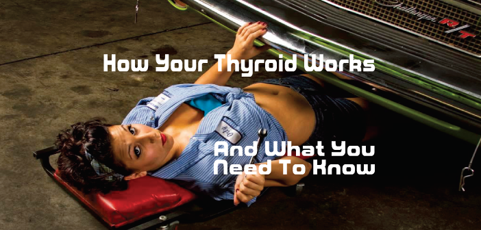 How-Your-Thyroid-Works-And-Things-You-Need-To-Know