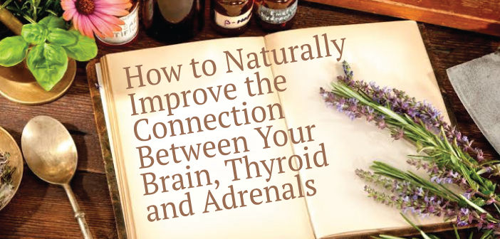 Naturally-Improving-The-Brain-Thyroid-And-Adrenal-Connection