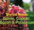 Thyroid-Needs-Iodine-Copper-Boron-And-Potassium