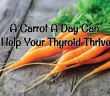 How-A-Carrot-A-Day-Can-Help-Your-Thyroid-Thrive
