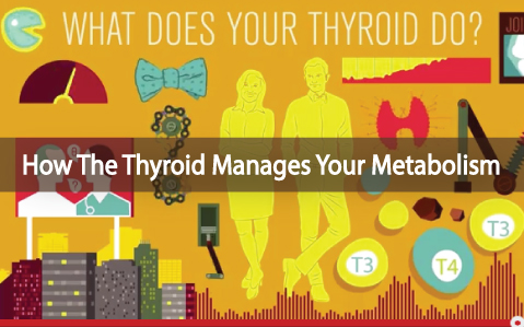 What-Exactly-Does-Your-Thyroid-Gland-Do-video