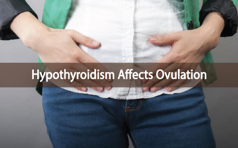 Ovulation-and-Hypothyroidism-What-You-Need-to-Know