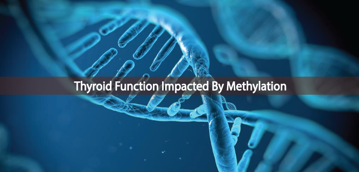 Does-Methylation-Have-Any-Impact-On-Thyroid-Function