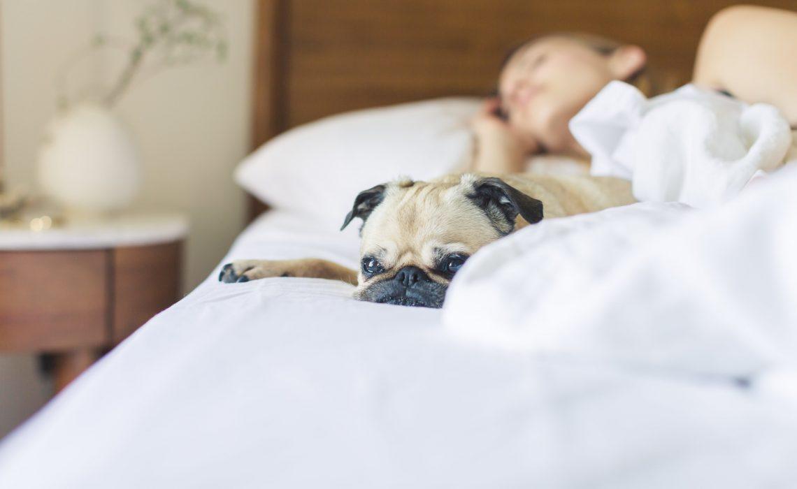 Importance-Of-Sleep-Thyroid-Nation