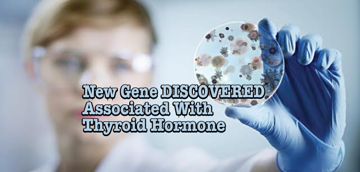New-Gene-Discovery-SYN2-Associated-With-Thyroid-Levels