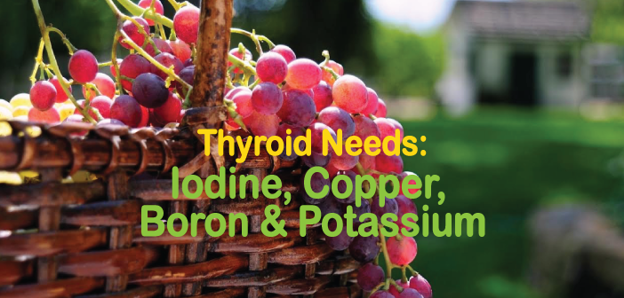 Thyroid-Needs-Iodine-Copper-Boron-And-Potassium